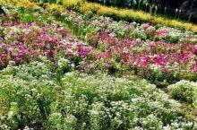 giardini ayurvedici